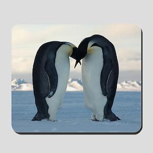 Emperor Penguin Courtship Mousepad