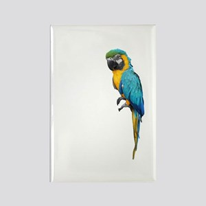 Blue Macaw Rectangle Magnet