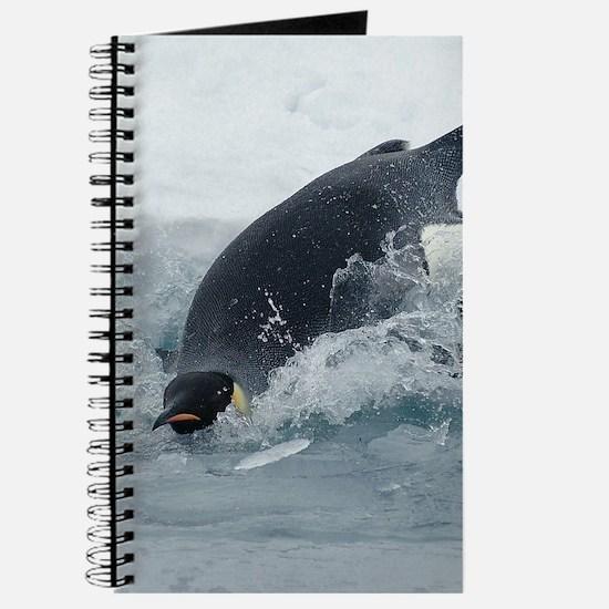 Diving Emperor Penguin Journal