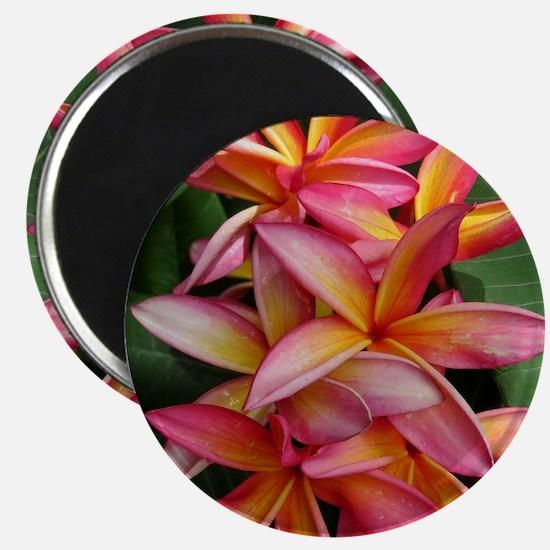 Hawaiian Plumeria Magnet