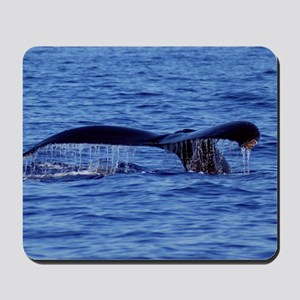 Humpback Whale Tail Maui Mousepad