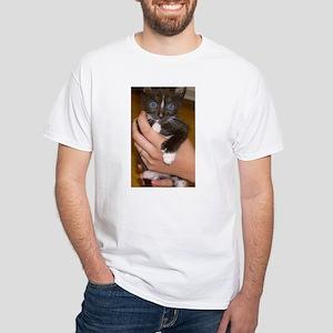 american polydactyl kitten T-Shirt
