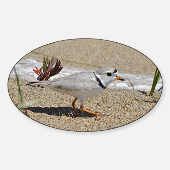 Piping plover Sticker (Oval)