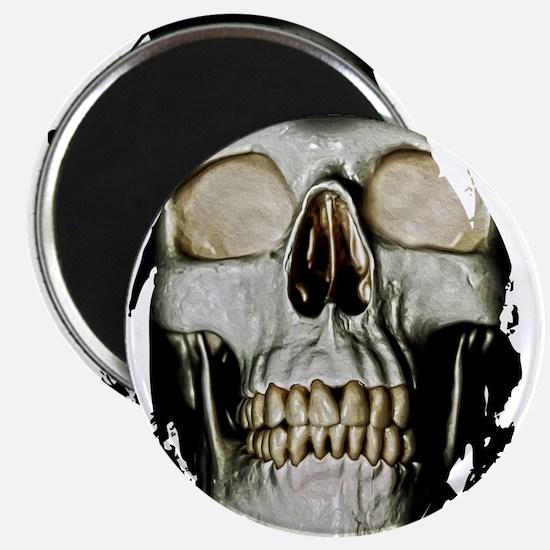Human Skull Magnets