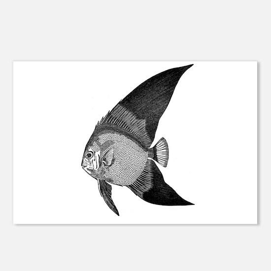Vintage Angel Fish illustration Postcards (Package