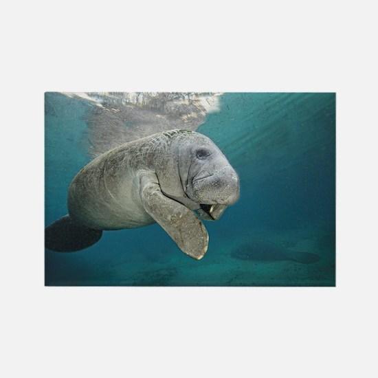 Cute Marine mammal Rectangle Magnet