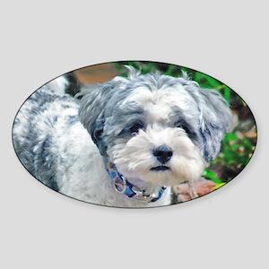 CUTE SHIH TZU BICHON PUPPY Sticker (Oval)