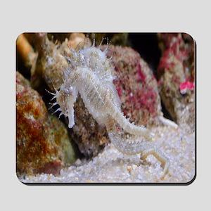 Seahorse Gifts Mousepad