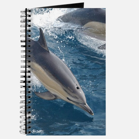 Common Dolphin Journal
