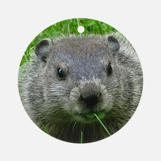 Woodchuck eating Ornament (Round)