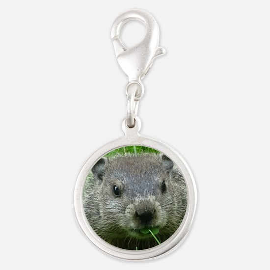 Woodchuck eating Charms