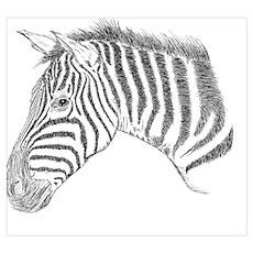 Zebra Face Illustration Poster
