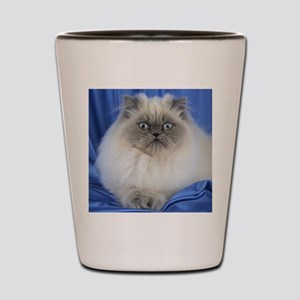 Cute Funny Himalayan Cat Shot Glass