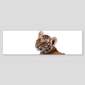 baby tiger Bumper Sticker