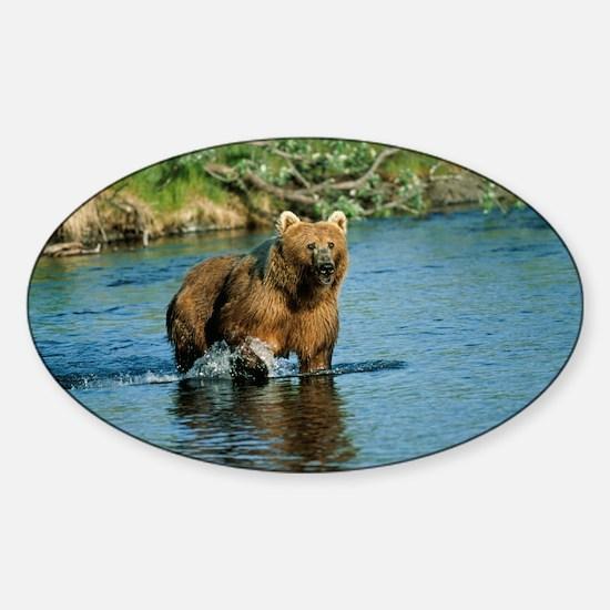 animal kodiak brown bear Decal