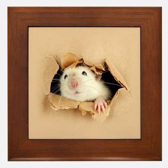 Cool Hamster Framed Tile