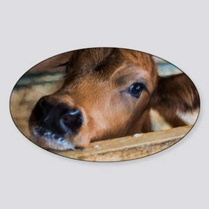 Calf Sticker (Oval)