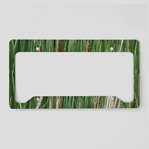 Ponds, cattails License Plate Holder