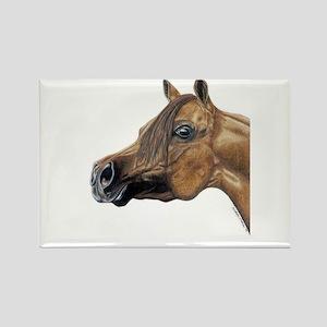 Arabian Horse Magnets