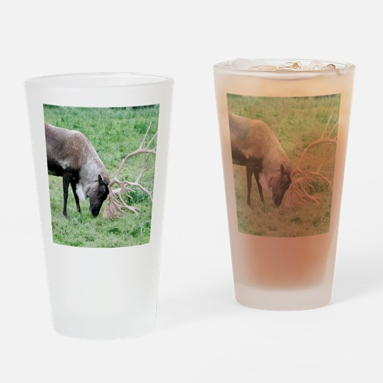 Caribou with Large Antlers Drinking Glass