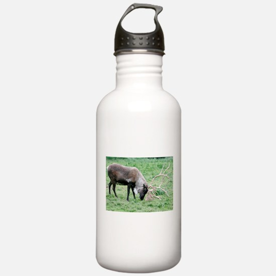 Caribou with Large Ant Water Bottle