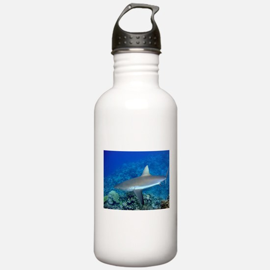 Grey Reef Shark Water Bottle