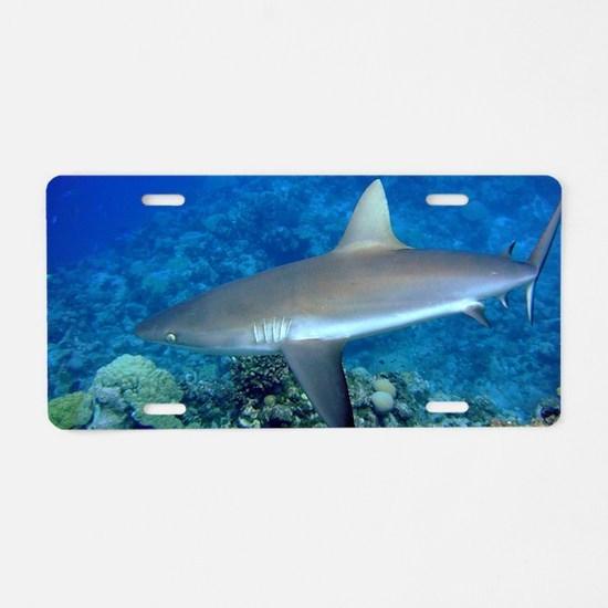 Grey Reef Shark Aluminum License Plate