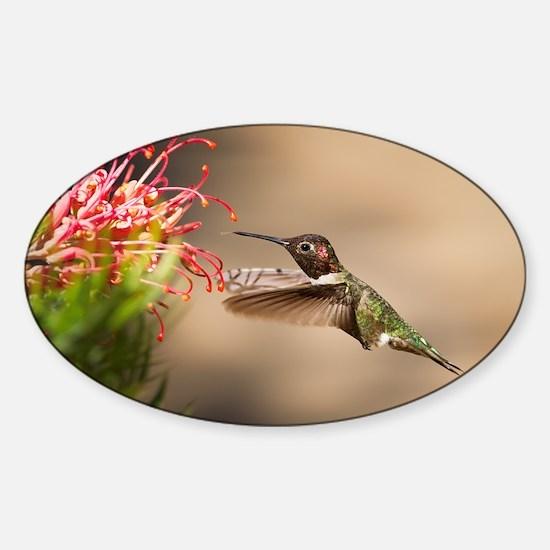 Cute Hummingbird Sticker (Oval)