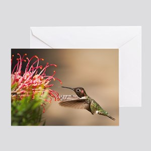 Hummingbird greeting cards cafepress greeting card m4hsunfo