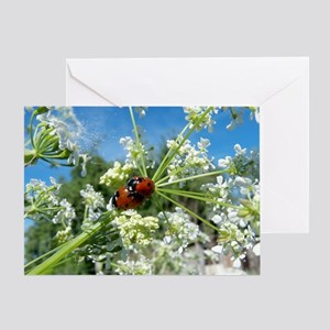 luck beetle Greeting Card