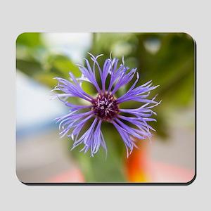 Flower of a cornflower Mousepad