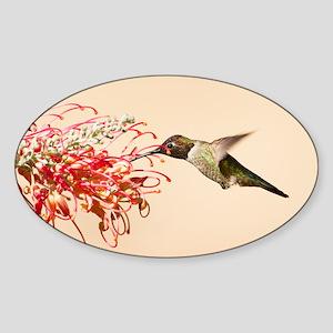 Annas Hummingbird Sticker