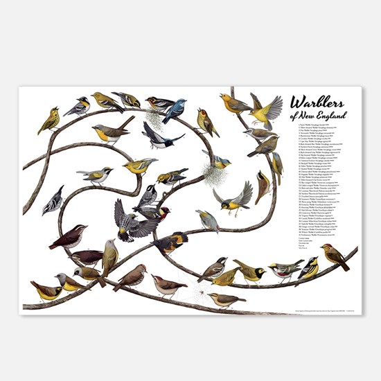 Warblers of New England Postcards (Package of 8)