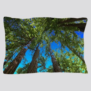 Muir Woods treetops Pillow Case
