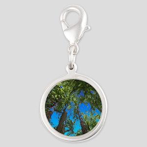 Muir Woods treetops Charms