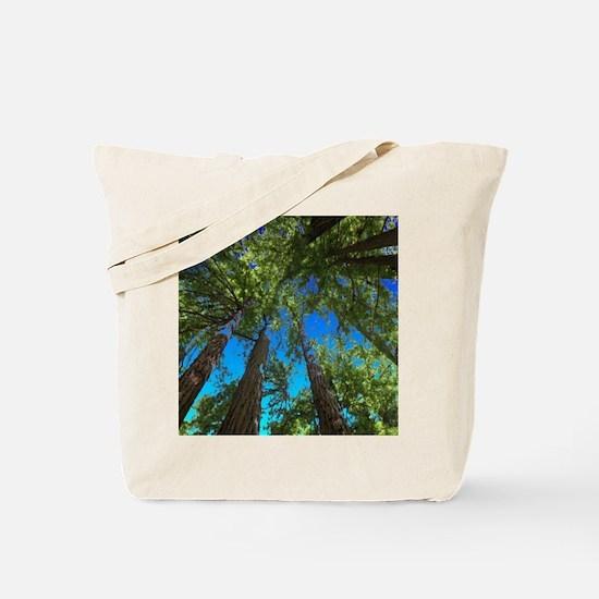 Muir Woods treetops Tote Bag