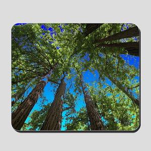 Muir Woods treetops Mousepad