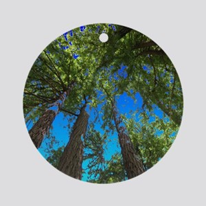 Muir Woods treetops Ornament (Round)