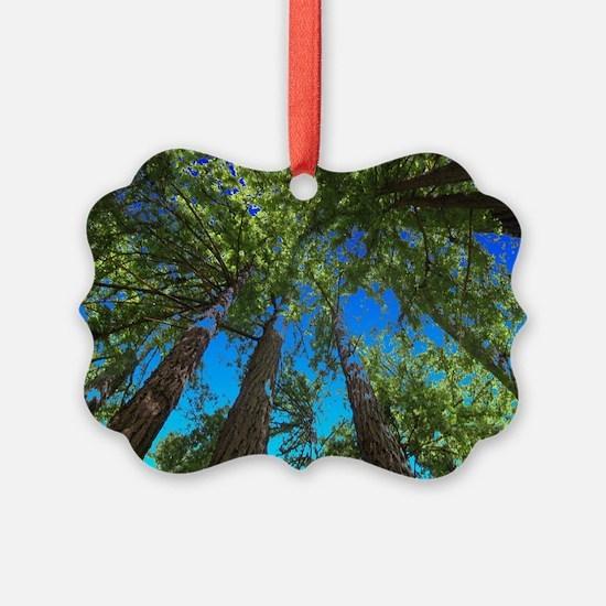 Muir Woods treetops Ornament