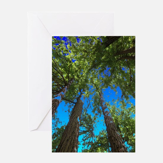 Muir Woods treetops Greeting Cards