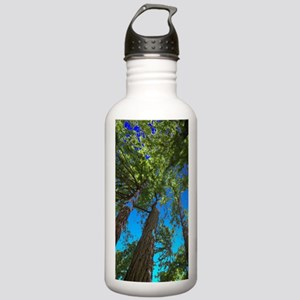 Muir Woods treetops Stainless Water Bottle 1.0L