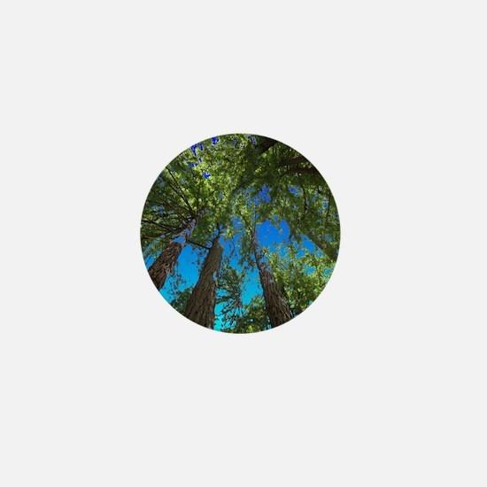 Muir Woods treetops Mini Button