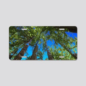 Muir Woods treetops Aluminum License Plate