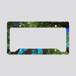 Muir Woods treetops License Plate Holder