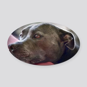 Loving Pitbull Eyes Oval Car Magnet