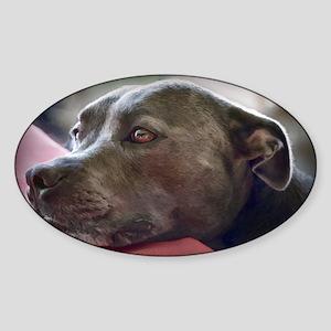 Loving Pitbull Eyes Sticker (Oval)