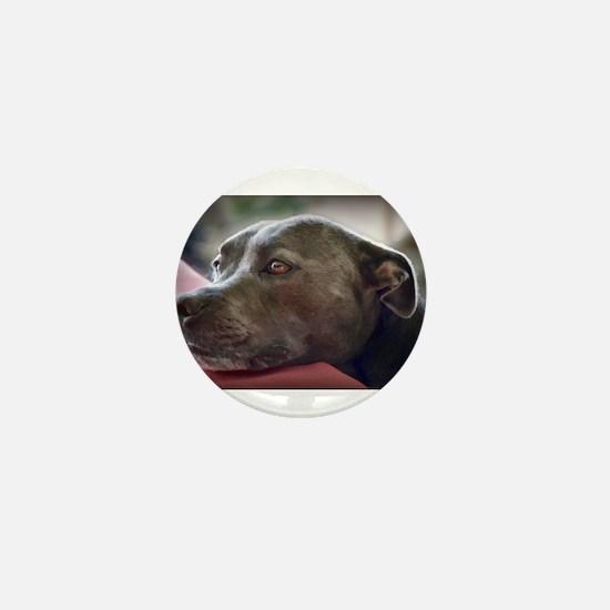 Loving Pitbull Eyes Mini Button