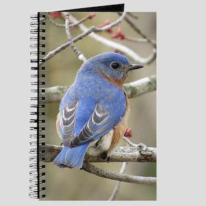 Backside Bluebird Journal