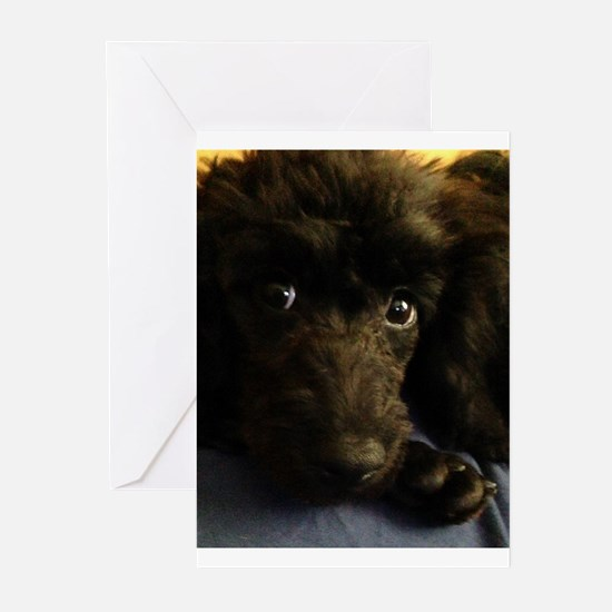 Ali's the poodle Greeting Cards