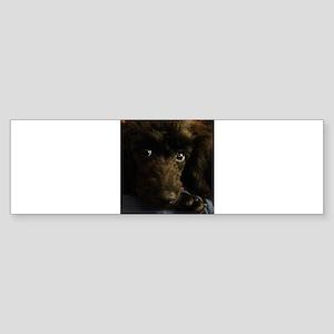 Ali's the poodle Bumper Sticker